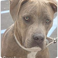 Adopt A Pet :: Cinnabun - Lake Forest, CA