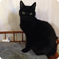 Adopt A Pet :: Newton - Simpsonville, SC