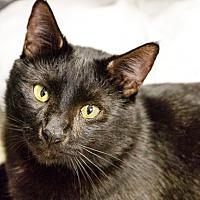 Adopt A Pet :: Neguino - oakland park, FL