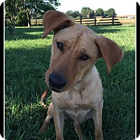 Adopt A Pet :: Anna B - Indian Trail, NC
