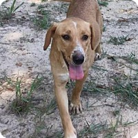Adopt A Pet :: Ginger - Livingston, TX