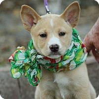 Adopt A Pet :: Miles - SOUTHINGTON, CT