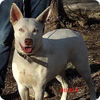 Adopt A Pet :: Diamond(60 lb) New Pics/Video - SUSSEX, NJ