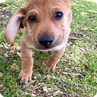 Adopt A Pet :: Ella - Wichita Falls, TX