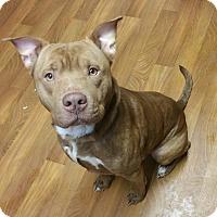 Adopt A Pet :: Murphy - Lisbon, OH