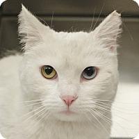 Adopt A Pet :: BUFFY - Las Vegas, NV