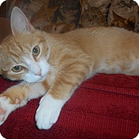 Adopt A Pet :: OJ - Parkton, NC