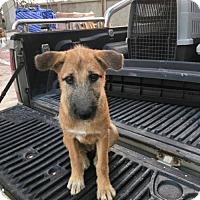 Adopt A Pet :: 'LUCK' - Agoura Hills, CA