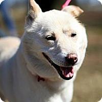 Adopt A Pet :: Daisy - West New York, NJ