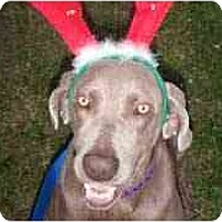 Adopt A Pet :: Mattie  **ADOPTED** - Eustis, FL