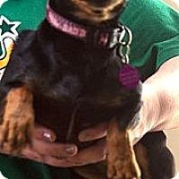 Adopt A Pet :: Emmy - NJ - Jacobus, PA