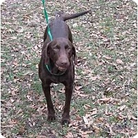 Adopt A Pet :: Paige - Houston, TX