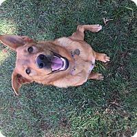 Adopt A Pet :: Pluto - Los Angeles, CA