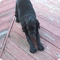 Adopt A Pet :: Murphy - Algonquin, IL