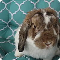 Adopt A Pet :: Falkor - Hillside, NJ