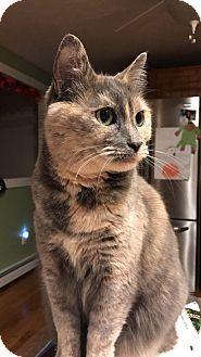 Domestic Shorthair Cat for adoption in Acushnet, Massachusetts - Ginger