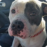 Adopt A Pet :: Sonic - Greenville, NC