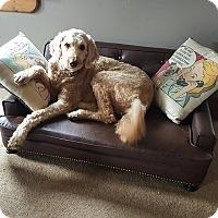 Adopt A Pet :: Buddy - Freeport, NY
