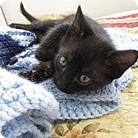Adopt A Pet :: Lincoln - Vero Beach, FL
