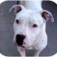 Adopt A Pet :: Blue - Scottsdale, AZ