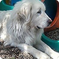 Adopt A Pet :: Maggie - Cambridge, IL