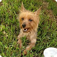 Adopt A Pet :: Willow - Miami, FL
