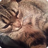 Adopt A Pet :: Alexa - Harrisburg, NC