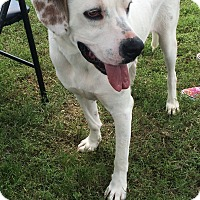 Adopt A Pet :: Sampson - Natchitoches, LA