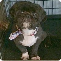Adopt A Pet :: Rock(y) - Homer Glen, IL