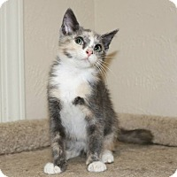 Adopt A Pet :: Ethel - Edmond, OK