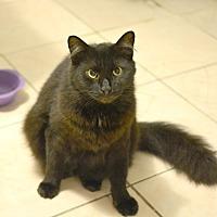 Adopt A Pet :: Raphael - Queens, NY