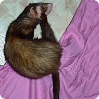 Adopt A Pet :: Banjo - Acworth, GA