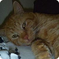 Adopt A Pet :: Huntington - Hamburg, NY