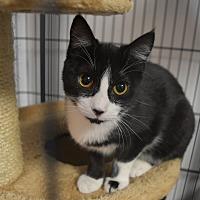 Adopt A Pet :: Sugar - Miami Shores, FL