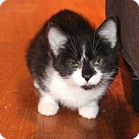 Adopt A Pet :: Hershey - Encinitas, CA