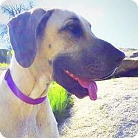 Adopt A Pet :: RAYA - Hanford, CA