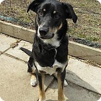Adopt A Pet :: Amy - Hamilton, ON