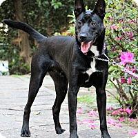 Adopt A Pet :: Keith - San Mateo, CA