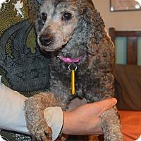 Adopt A Pet :: Cathy - Prole, IA