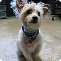 Adopt A Pet :: Mrs. Puff - Canyon Country, CA