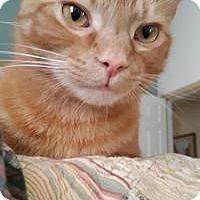 Adopt A Pet :: Keno - Duluth, GA