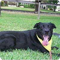 Adopt A Pet :: Timmy - Davie, FL