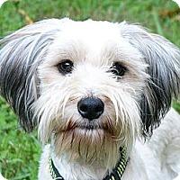 Adopt A Pet :: Mojag - Mocksville, NC