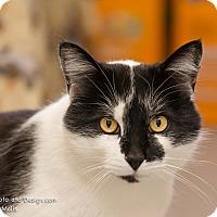 Adopt A Pet :: Scotty - Fountain Hills, AZ