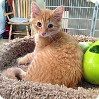 Adopt A Pet :: GABE - Hamilton, NJ