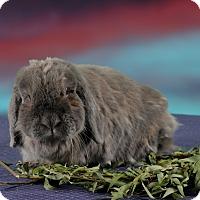Adopt A Pet :: Spice - Marietta, GA