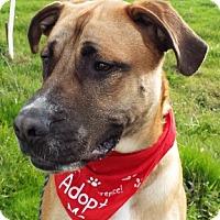 Adopt A Pet :: Diesel - Grants Pass, OR