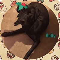 Adopt A Pet :: Holly - Reno, NV