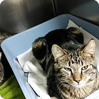 Adopt A Pet :: Ernie - Chippewa Falls, WI