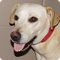 Adopt A Pet :: Alfa - Oxford, MS